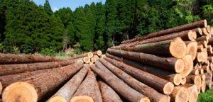 Qualities of Good Timber