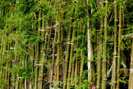 Can bamboo be used instead of steel in concrete?
