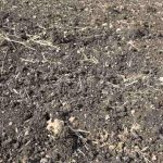 What are the difference between cohesive and cohesionless soil?